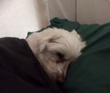 Cold Sleeper 2