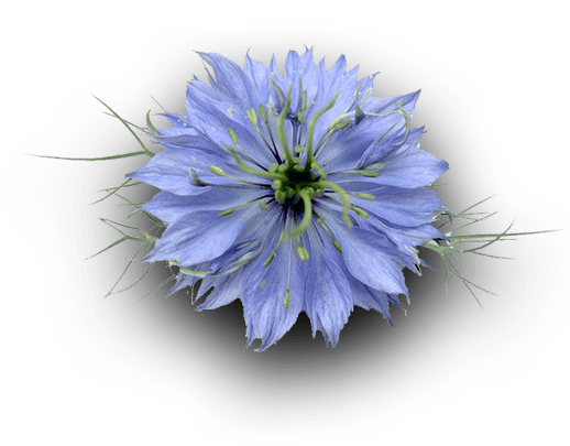 New Seed flower