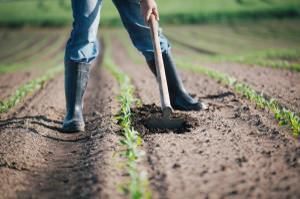 Bolsa de investigação e inovação agrícolas alargada a projetos do PRR