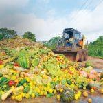 alimentos-no-lixo