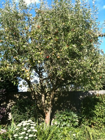 My Parents Apple Tree, UK