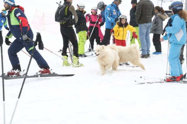 ski-slopes-mzaar-169