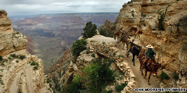 Grand Canyon mule trek