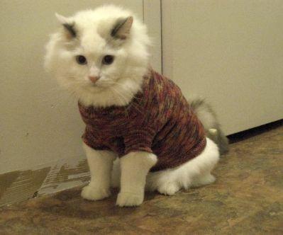 sushiinsweater.jpg