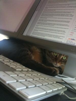 baby-kitty.jpg