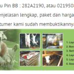 jasa kambing aqiqah bekasi 2016