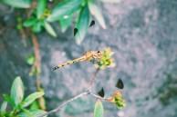Dragonfly Photo copyright Rebecca Lau