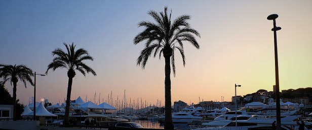 Palm Trees and Yacht Photo copyright Rebecca Lau