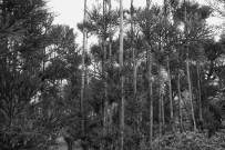 Bamboo Photo copyright Rebecca Lau