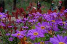 Violet Flowers Photo copyright Rebecca Lau