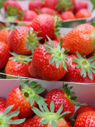 Strawberries Photo copyright Rebecca Lau