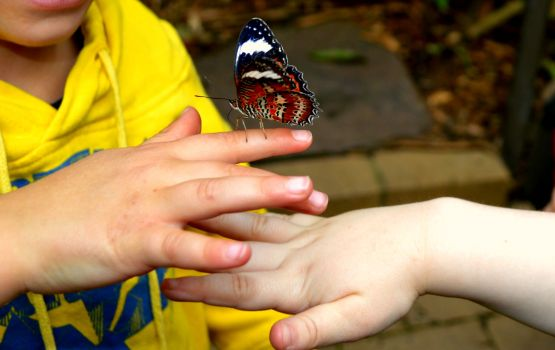 #hands #butterfly