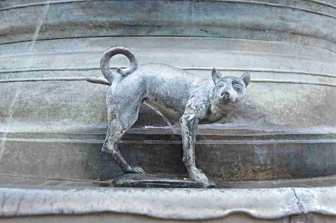 Hund pullert an Brunnen