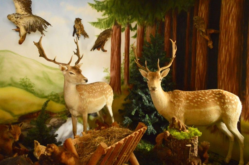 stuffed deer ausgestopftes Wild be kitschig blog Märchenwald Saalburg