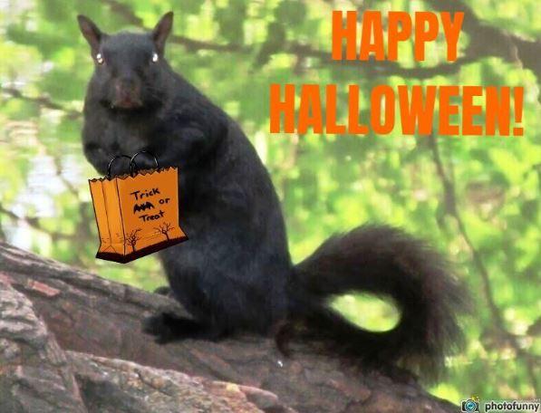 Black Happy Halloween Squirrel Linda Schaub