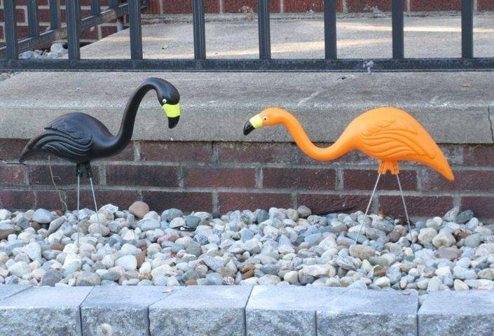 Guest photo Halloween Flamingos