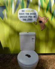 #koala poo
