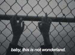 "Costal hung her hands on the fence ""Baby this is not Wonderland."" ""I know.&#82 ..."