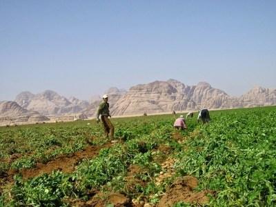 wadi rum farm 4