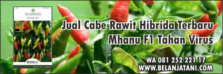 Bibit Cabe Rawit,Pertanian,Virus Kuning,Benih Hibrida, Cabe Rawit Hibrida Terbaru Mhanu F1