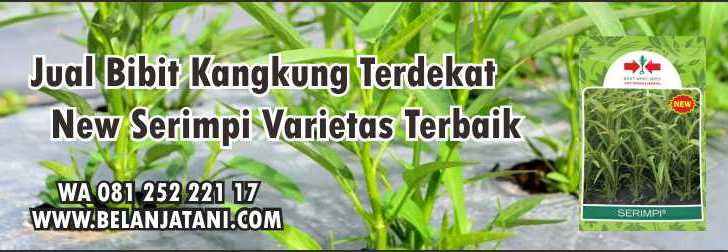 Jual Bibit Kangkung Terdekat New Serimpi,Bibit Kangkung,Sayuran,Toko Bibit Sayuran Terdekat ,Kagkung Darat