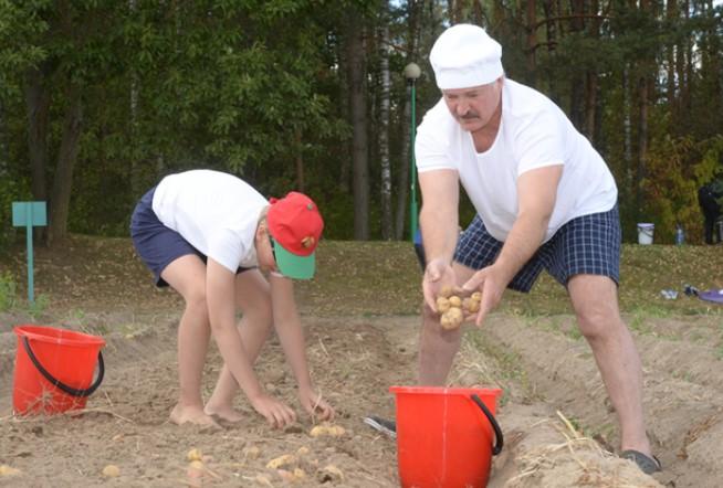 Анекдот почти воплотился в жизнь: 8 фактов о Лукашенко и картошке