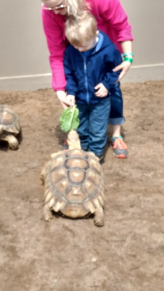 Feeding tortoises.