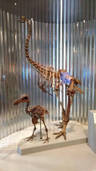 Extinct bones.