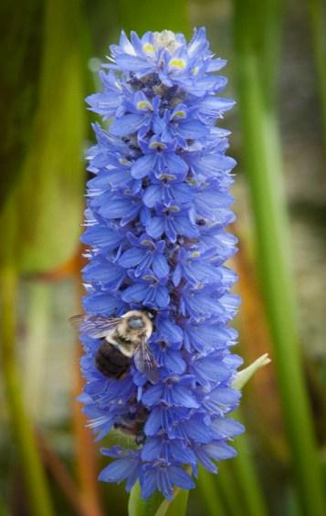 Look! A bee!