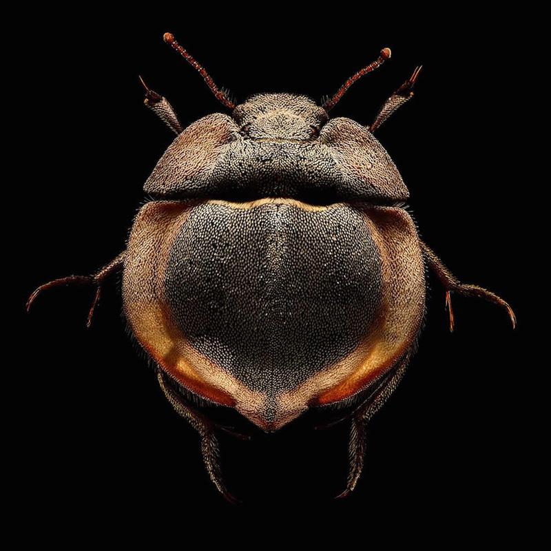LevonBiss serangga makro 1