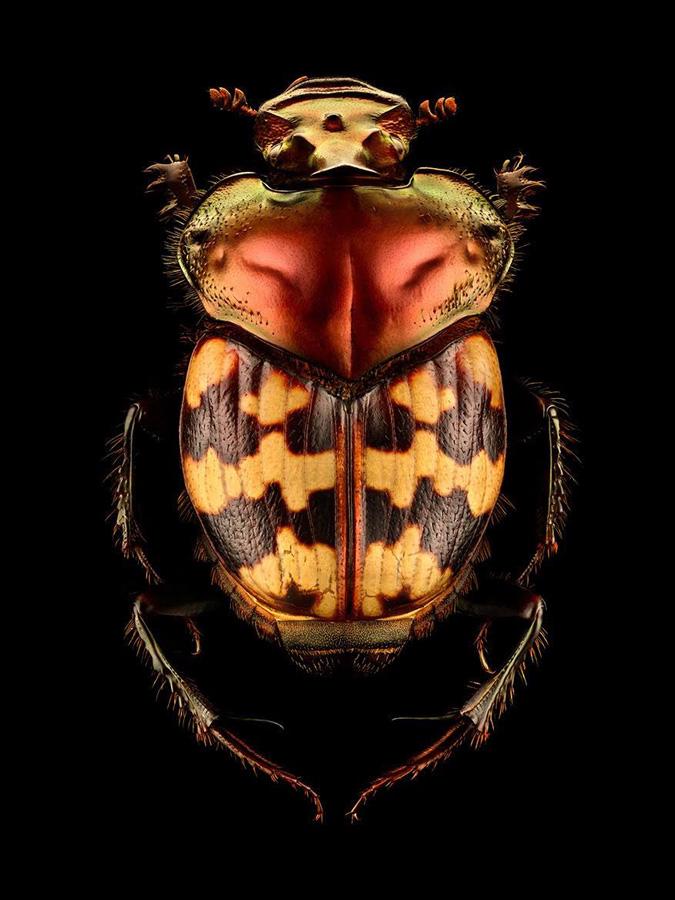LevonBiss serangga makro 3