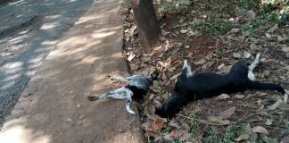Dogs deaths