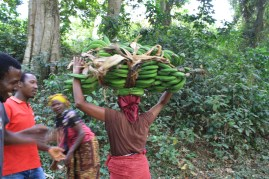 A Tengeru woman carrying 40kg of bananas on her head to market