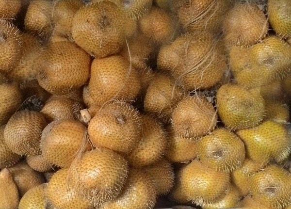 buah khas jogja salak gading