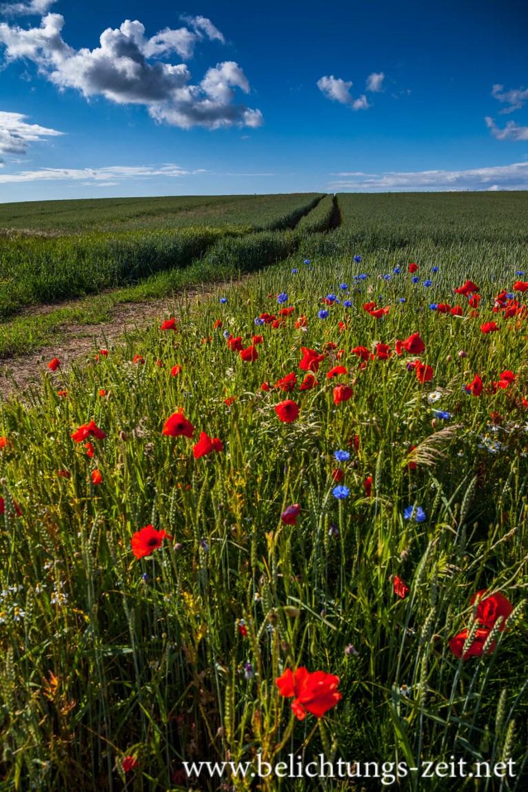 Feld mit Mohn und Kornblumen