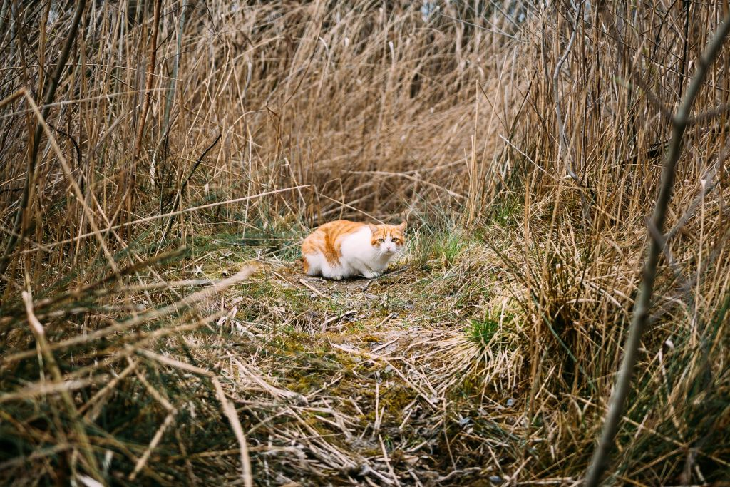 tense and wary cat alone in a field surrounded by tall grass