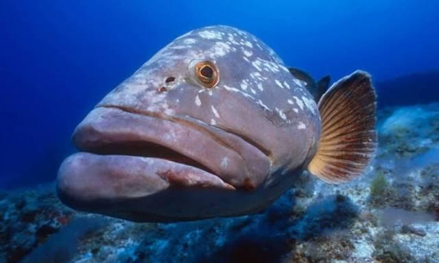 5 γνωστά είδη ψαριών των ελληνικών θαλασσών που δεν θα προλάβουν να δουν τα παιδιά σου