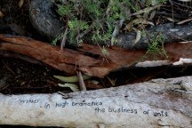 wind / in high branches / the business of ants