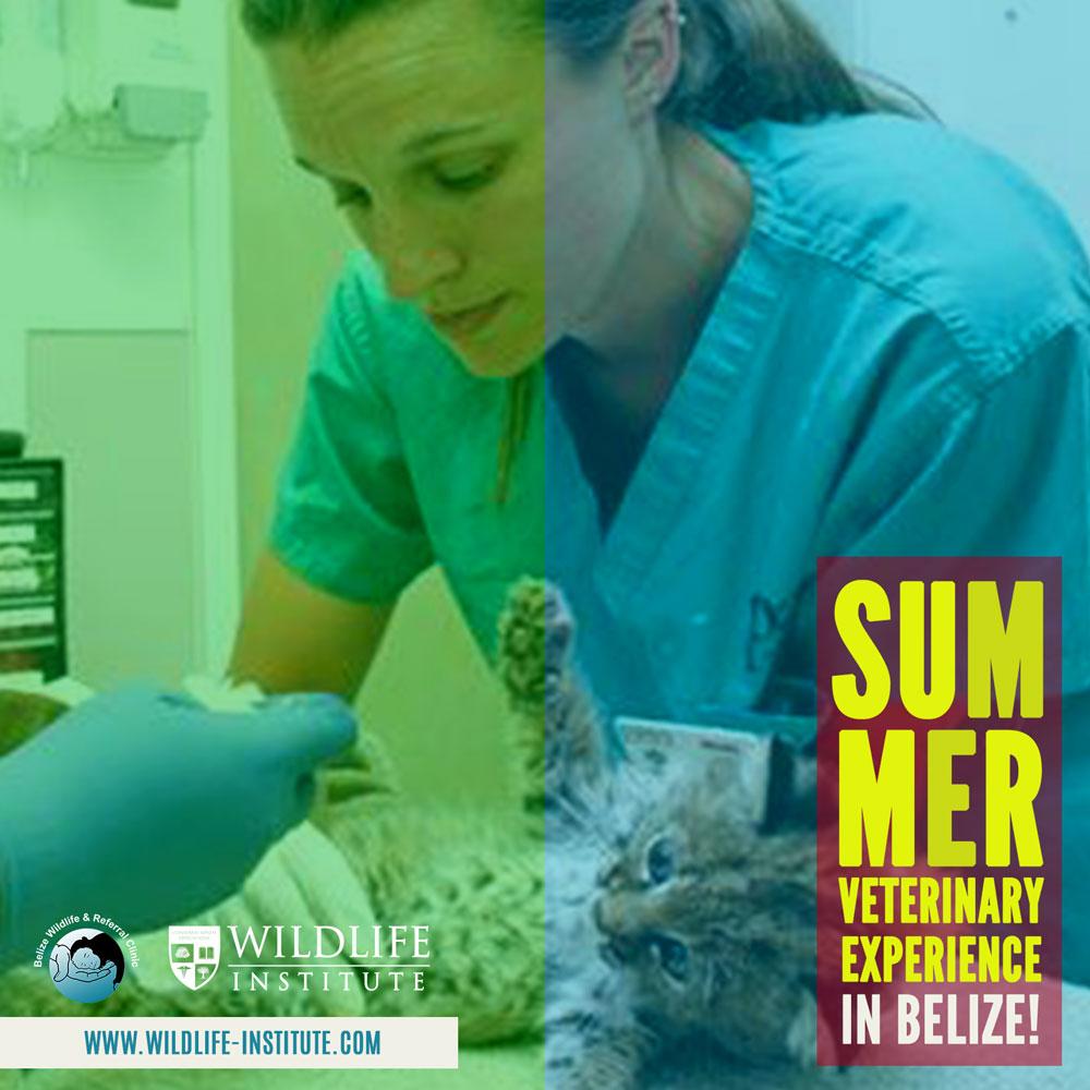 Summer Veterinary Experience in Belize