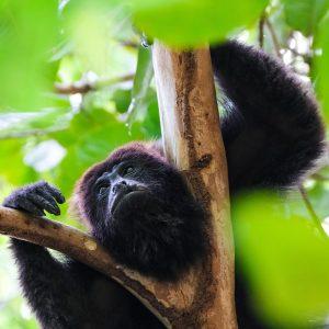 Belize Veterinary Webinars- Coming Soon