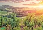szőlőhegy a felkelő nap fényében