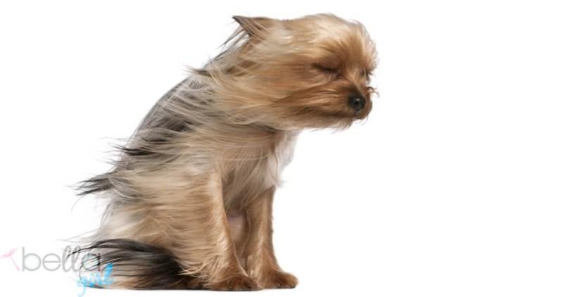 kiskutya lobbogó szőrzettel