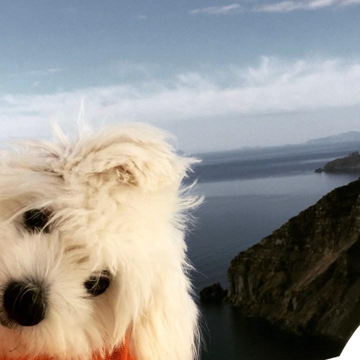 Santorini Dog