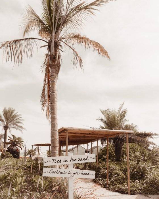 palm tree direction board