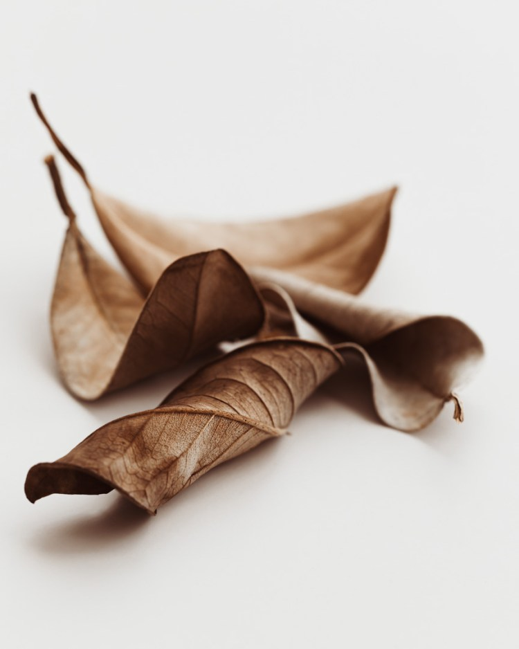 Dried leave aesthetic neutral minimal