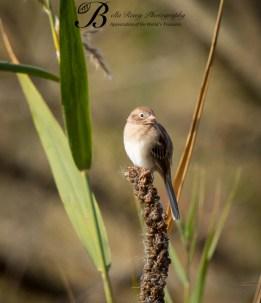 Start with a little birding. Field Sparrow