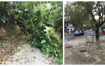 Incidències pel temporal de vent i pluja de dilluns a Bellaterra