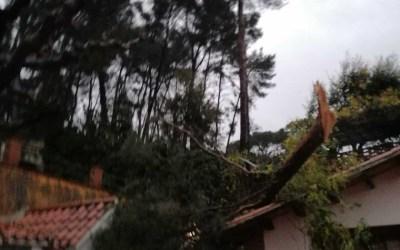 El temporal de vent i pluja Glòria arriba a Bellaterra