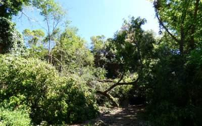 L'enretirada d'arbres caiguts s'endarrereix setmanes a Bellaterra
