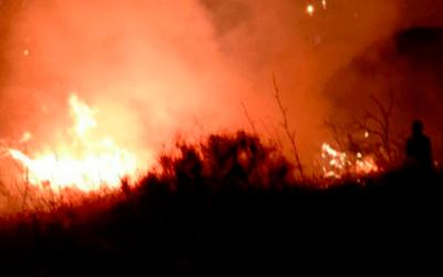 Un foc crema de matinada a Collserola